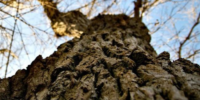 ВОмской области мужчину задавило деревом при заготовке дров