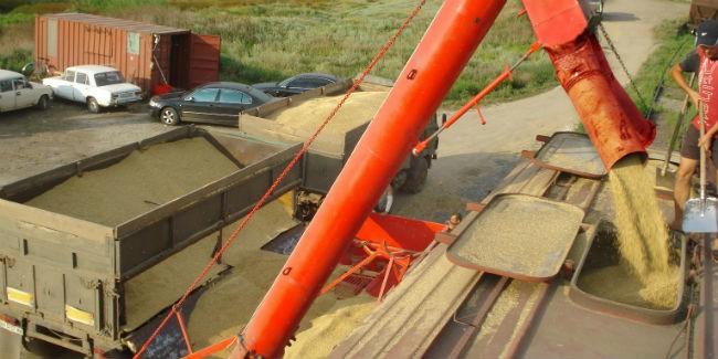 Омское зерно активно реализуют в КНР