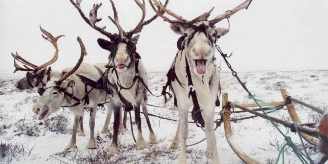 Омичка умудрилась за8 млн. руб. реализовать несуществующие рога оленя