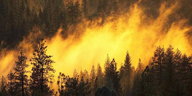 ВОмской области ввели особый режим из-за пожаров
