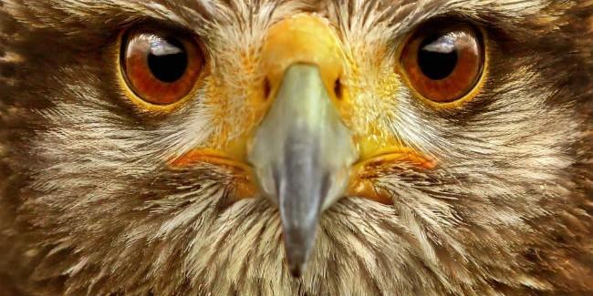 ВОмской области осудили контрабандистов, вывозивших ценных птиц наБлижний Восток