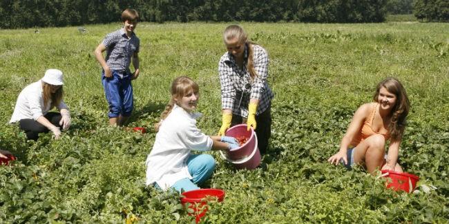 ВОмской области подростки трудились летом закопейки