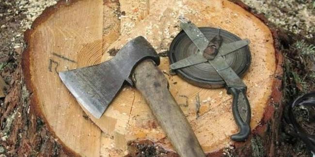 ВОмской области глава лесного хозяйства отделался условным сроком