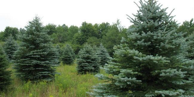 Омская область готовится квсероссийскому Году экологии