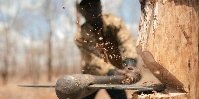 Путин поручил Генпрокуратуре проверить факты незаконной вырубки леса вОмской области
