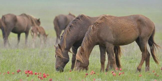 ВОмск нелегально пригнали семь лошадей