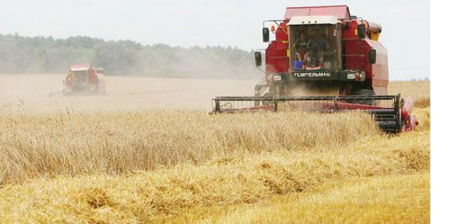 Омские аграрии уже намолотили 1,5 млн. тонн зерна