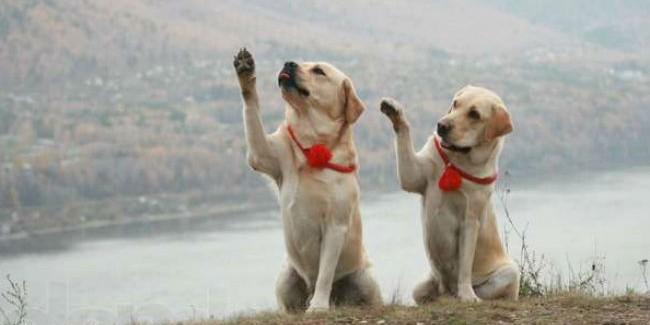 Вомском парке обустроили специальную площадку для собак