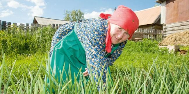 ВОмске начнут работать садовые маршруты