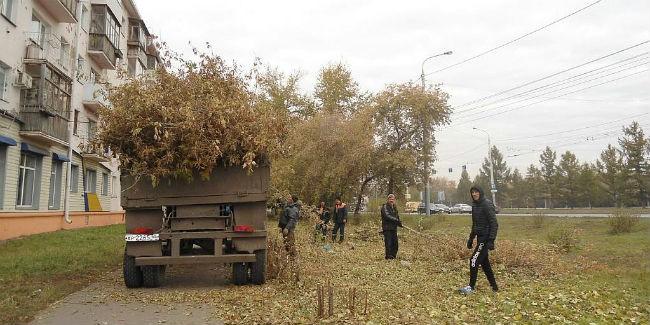 Больше 2-х  десятков деревьев ценных пород высадят наулице Красный Путь