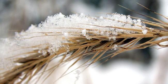 Свердловский Минсельхоз: полностью убрать урожай в регионе уже не не удастся