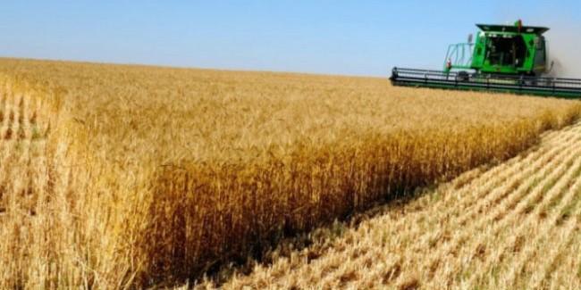 Высокая урожайность и 3 млн тонн зерна — все об уборочной кампании в Омской области